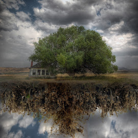 Hanging On by Eric Demattos - Digital Art Places ( school house, climbing, tree, roots, eric demattos, surreal, abandoned )