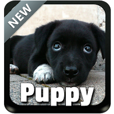Puppy Theme Keyboard