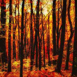 Fall Beauty by Dave Walters - Landscapes Forests ( fall, nature up close, canon rebel, colors, digital art )