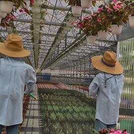Gardeners  by Lorraine D.  Heaney - People Professional People