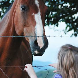 Little Girls Love Horses by Katie Shutter Bunny Meadows - Animals Horses ( bond, love, child, girl, horse, little, cute, toddler, animal, kid )