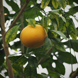 by Darrell Tenpenny - Nature Up Close Gardens & Produce