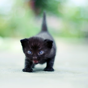 Ying by Viktorija Golubić - Animals - Cats Kittens ( kitten, kittens )