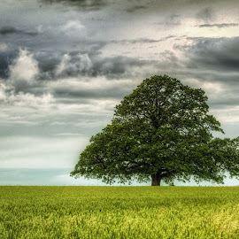 Lonely tre by Dirk Rosin - Landscapes Prairies, Meadows & Fields (  )