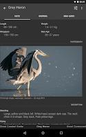 Screenshot of Free Guide: Nordic Birds