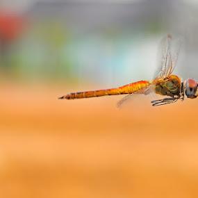 Good Bye by Setiady Wijaya - Animals Insects & Spiders