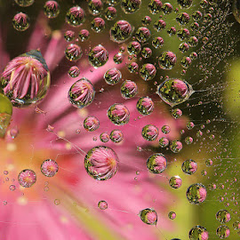 dews by Yenni Sumita - Nature Up Close Water