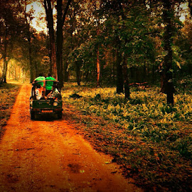 by Sambit Bandyopadhyay - Landscapes Forests
