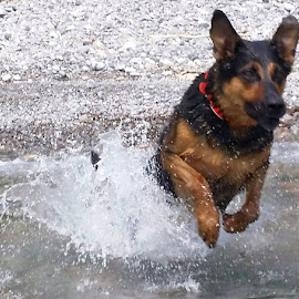 Fearless Determinatio by Anthony Carlo - Animals - Dogs Running