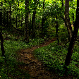 Smoky Mountains by Brook Kornegay - Landscapes Forests ( trail, forest, hiking, smoky mountains,  )