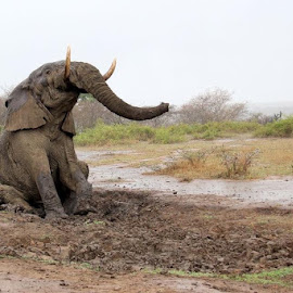 Mud glorious mud by Romano Volker - Animals Other Mammals