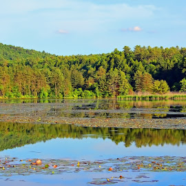 Dewey's Pond by Judy Laliberte - Novices Only Landscapes ( water, blue sky, trees, reflections, light )