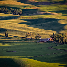 Palouse Farm by Scott Wood - Landscapes Prairies, Meadows & Fields ( field, farm, washington, palouse, nxnw2015, shadow, sunset, green, trees, nxnw, sunrise, expeditionpalouse,  )