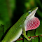 green lizard with assets 6-19-2015 IMG_4820.JPG
