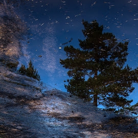 Reflection by Anngunn Dårflot - Uncategorized All Uncategorized