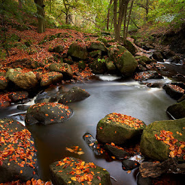 Padley Autumn by Martin West - Landscapes Forests ( stream, autumn, padley gorge, leaves, peak district, colours )