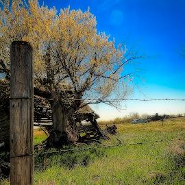 It Falls Apart by Scott Hryciuk - Landscapes Prairies, Meadows & Fields ( farm, car, field, post, sky, cadillac, blue, prairie, rotting, decay )