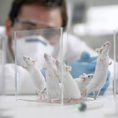 에탄올이 스트레스 경감. 실험으로 증명