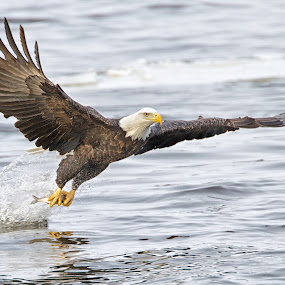 Fish'n . . . by Mark Theriot - Animals Birds