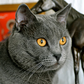 Hugo and horse by Serge Ostrogradsky - Animals - Cats Portraits