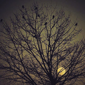 Night by Nat Bolfan-Stosic - Landscapes Starscapes ( moon, tree, peace, night, birds )