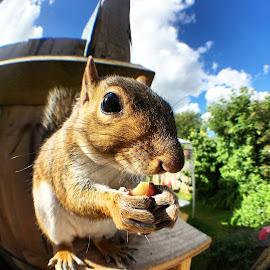 Kevin by Alan (Mop) Lewis - Instagram & Mobile iPhone ( olloclipfisheye, fisheye, olloclip, pet, squirrel )