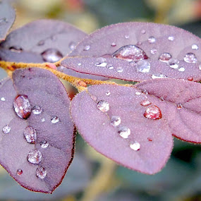 Nature's Gems by Alan Chew - Nature Up Close Leaves & Grasses (  )