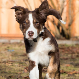 by Casey Bebernes - Animals - Dogs Running