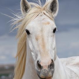 by Kane Bertola - Animals Horses