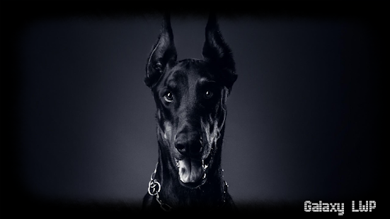 Doberman Wallpaper - screenshot
