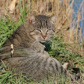 by Radomir Perin-Rasa - Animals - Cats Portraits