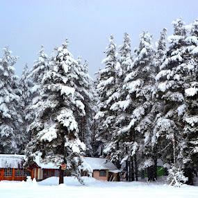 Сняг.... by Dobrinka Ivanova - Landscapes Weather ( сняг, радост )