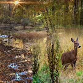 Creekside by Mill Tal - Digital Art Places
