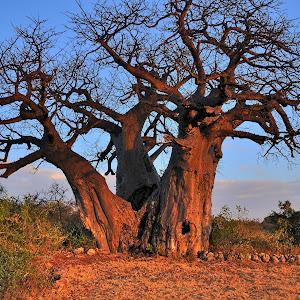 Tanzania_2015_5210_HDR.jpg