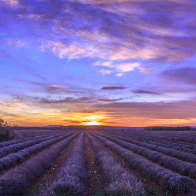 Lavender Sunset by Marcel de Groot - Landscapes Prairies, Meadows & Fields ( provence, clouds, field, orange, sky, purple, sunset, sundown, france, landscape, flowers, lavender )