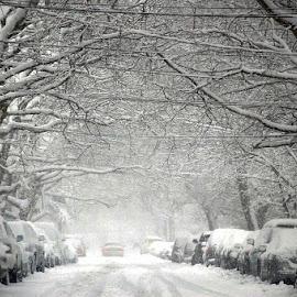 by Harold Stoler - City,  Street & Park  Street Scenes ( street, snow, white, landscape )
