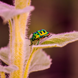 Bug by Naveen Joyous - Animals Insects & Spiders ( green, bug, leaves, insect, close up )