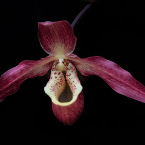 13-02-07-Orchids-344-Edit-Edit-Pixoto.jpg