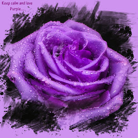Purple Rose by Dave Walters - Typography Captioned Photos ( typography, macro, nature, purple, lumix fz2500, colors, flower,  )