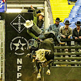 Put the Spur to It by Cindy Hicks-Butler - Sports & Fitness Rodeo/Bull Riding