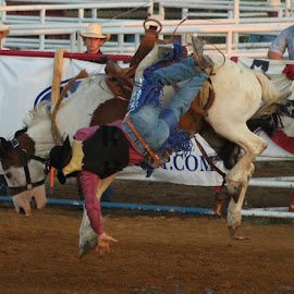 Free Falling by Jeanene Leonard Galewaler - Sports & Fitness Rodeo/Bull Riding ( horse, falling, cowboy, bucking, rodeo )