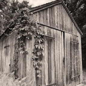 Shack by Fran Gallogly - Buildings & Architecture Other Exteriors ( black and white, pwc building )