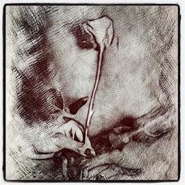 White Rose by Solomen Flewellen - Digital Art People