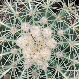 cactus by Jeanne Knoch - Nature Up Close Other plants