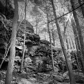 Trees and Rock Ledge, 2015.04.25 by Aaron Campbell - Instagram & Mobile iPhone ( luzerne county, hdr, vividhdr, outdoors, iphone 6 plus, the tubs, pennsylvania, nepa, fotor, seven tubs natural area, snapseed, hikepa )