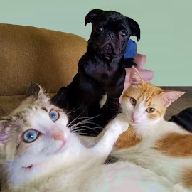 Family Portrait:  Buddy, Big Mamma and Kitty by Eric Michaels - Animals - Cats Playing ( cats, animals, pets, inside, group, dog, portrait, expressions,  )