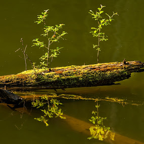 nature by Sorin Tanase - Nature Up Close Other Natural Objects ( water, nature, green, lake, colours )