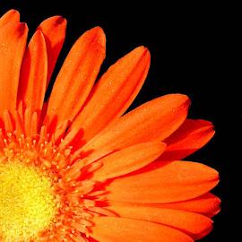 HALF BEAUTY by SANGEETA MENA  - Flowers Flower Gardens