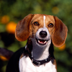 Dogs Photo Themes APK Image