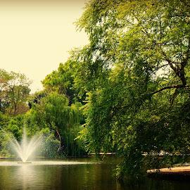 by Cara Losh - City,  Street & Park  City Parks